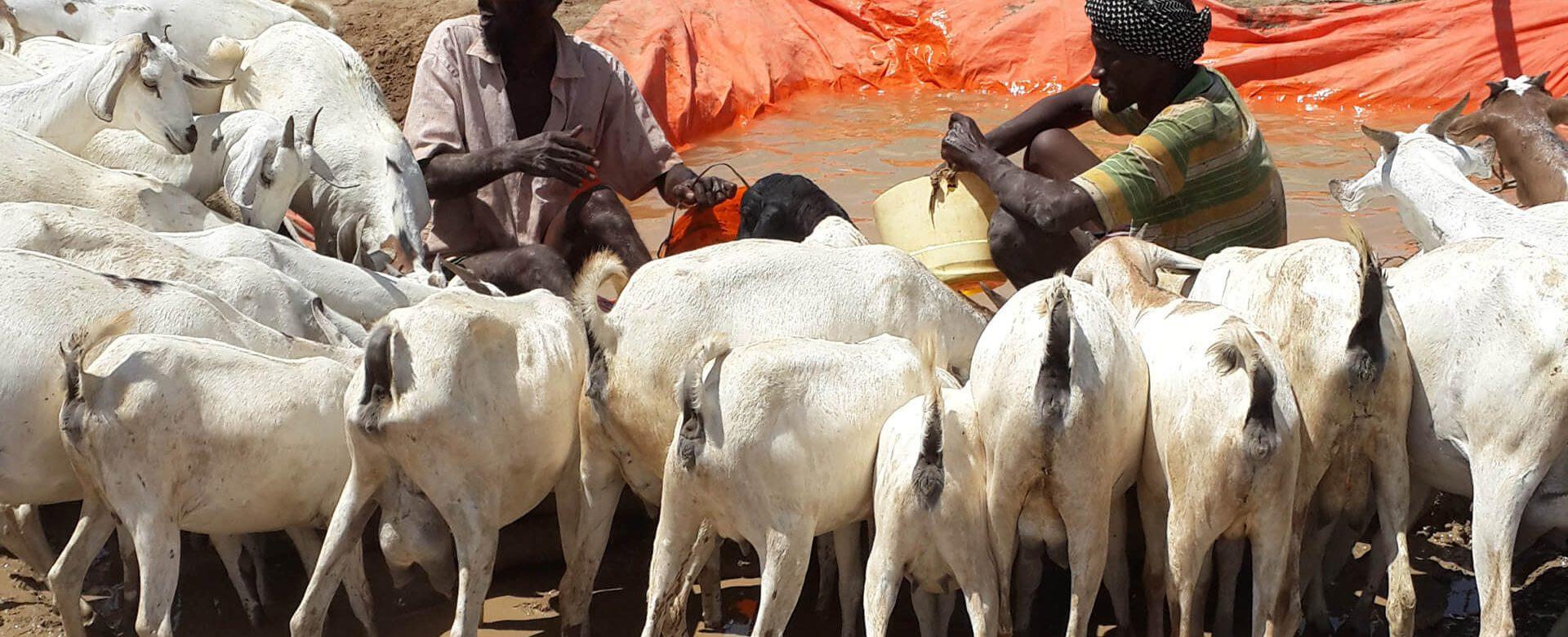 20150610_121813 herds